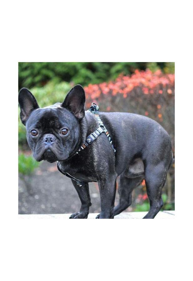 ウルフギャング・マン / LokiWolf / HARNESS ハーネス S / 小型犬用 1